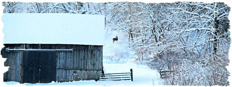 WWRC Winter scene with Whitetail deer 2017