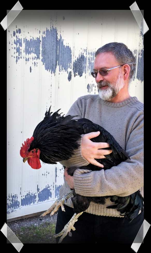 Mike and 18 month old Jersey Giant Rooster