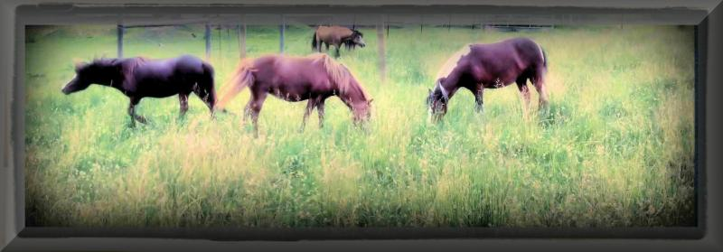 Three of our main broodmares.