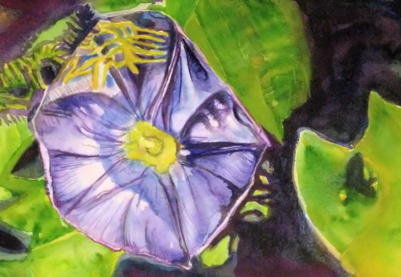 Morning Glory Flower Watercolour Painting